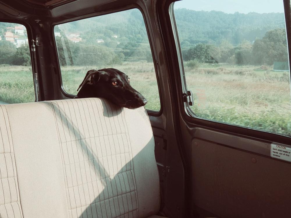 dog-922984_1280